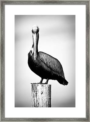 The Stare Down Framed Print