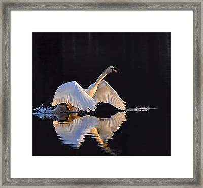 The Swan Of Zoar Framed Print by Terry Cosgrave