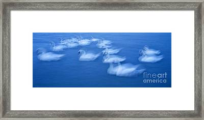 The Swans On Ripple Surface Framed Print by Odon Czintos