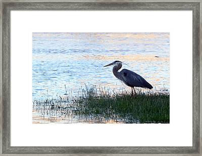 The Tranquil Blues Framed Print