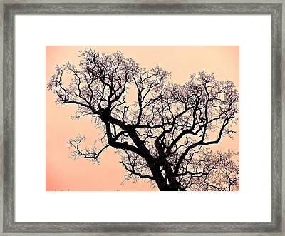 The Tree On Hobson Avenue Framed Print