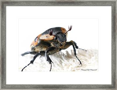 The Warrior 01 Framed Print