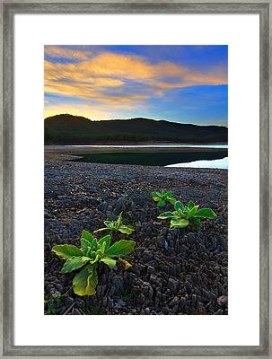 Framed Print featuring the photograph The Way Of Life by Kadek Susanto