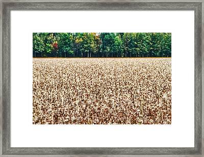 Cotton - Farm - Landscape - The White Stuff Framed Print by Barry Jones