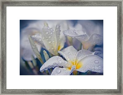 The Wind Of Love Framed Print
