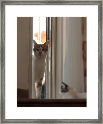 Theo Framed Print by Anita Dale Livaditis