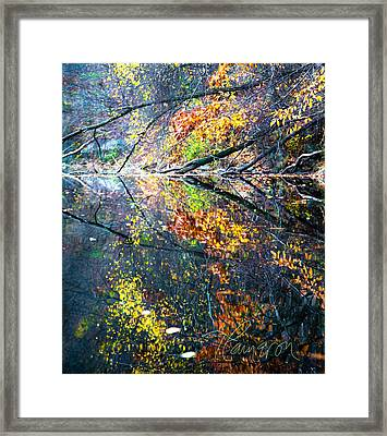They Wink At Me Framed Print by Tom Cameron