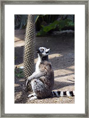 Framed Print featuring the photograph Thorny Mood by Rafael Quirindongo