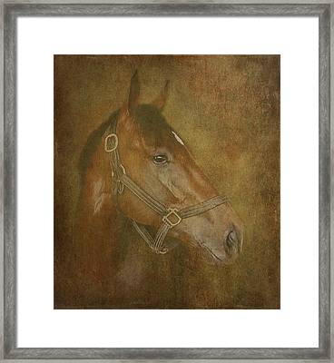 Thoroughbred Framed Print by Angie Vogel