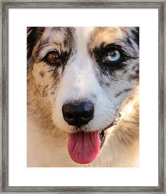 Those Eyes Framed Print by Cathy Donohoue