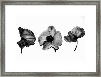 Three Beauties Framed Print