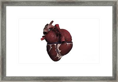 Three Dimensional View Of Human Heart Framed Print by Stocktrek Images