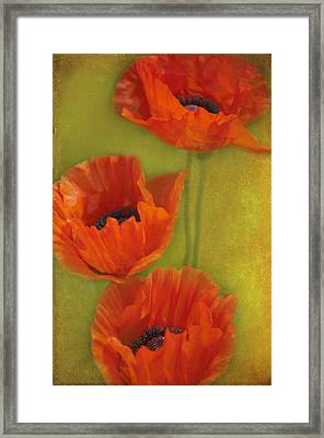 Three Poppies Framed Print by Carolyn Dalessandro
