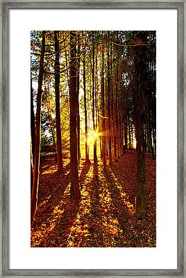 Through The Pines Framed Print by Phil Koch