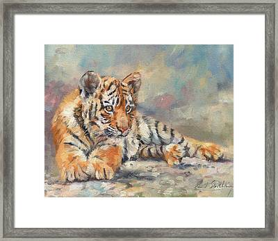 Tiger Cub Framed Print by David Stribbling