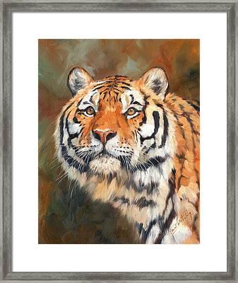 Tiger Look Framed Print by David Stribbling