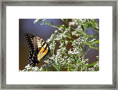 Tiger Framed Print by Reid Callaway