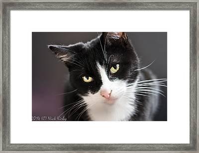 Tiggles Framed Print