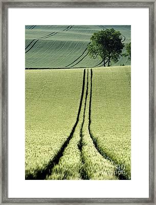 Tire Tracks In A Wheat Field. Auvergne. France. Framed Print by Bernard Jaubert