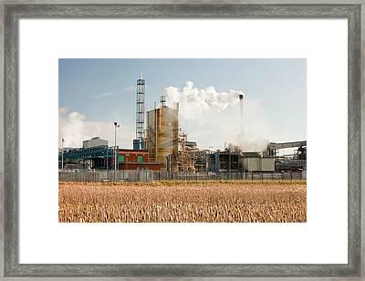 Titanium Dioxide Plant Framed Print