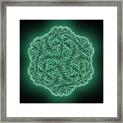Tobacco Necrosis Virus Capsid Framed Print by Science Photo Library