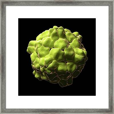 Tobacco Ringspot Virus Particle Framed Print by Sciepro/science Photo Library