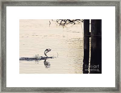 Top Water Explosion Framed Print by Scott Pellegrin
