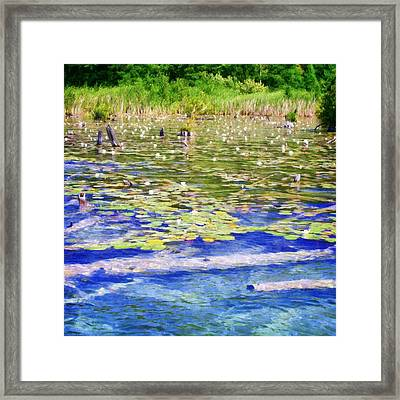 Torch River Water Lilies Framed Print by Michelle Calkins