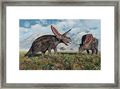 Torosaurus Dinosaurs During Earths Framed Print