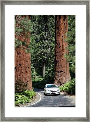 Tourism In Sequoia National Park Framed Print by Jim West