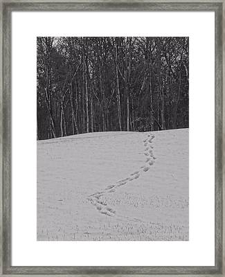 Tracks In The Snow Framed Print by Dan Sproul