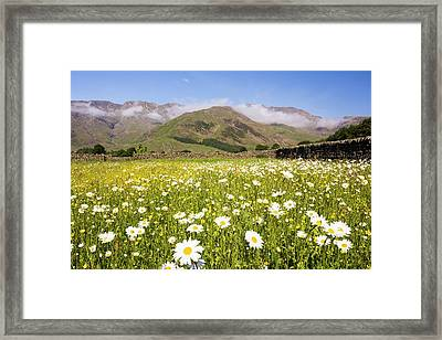 Traditional Hay Meadows Framed Print