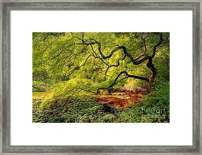 Tranquil Shade Framed Print