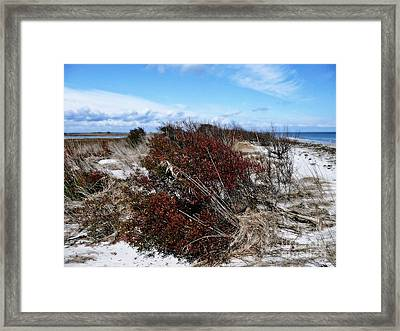 Tranquility Bay Framed Print by Scott Allison