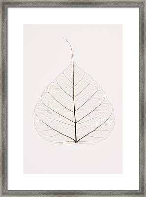 Transparent Leaf Framed Print by Kelly Redinger