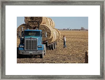 Transporting Bales Of Hay Framed Print