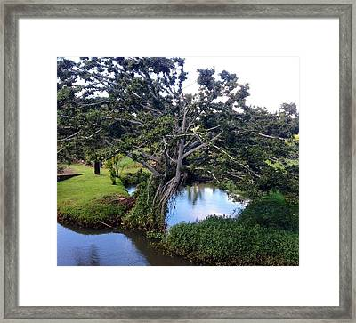 Framed Print featuring the photograph Tree by Alohi Fujimoto