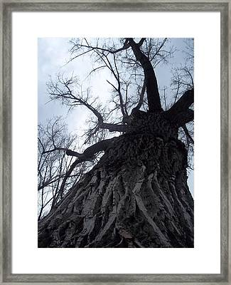 Tree Framed Print by Angela Stout