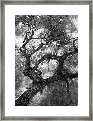 Tree At Berkeley Framed Print by Ron Regalado