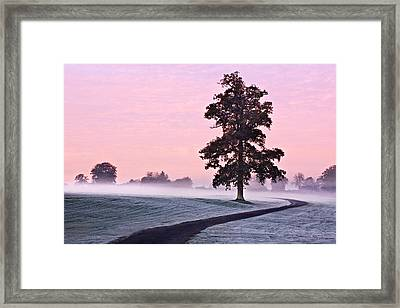 Framed Print featuring the photograph Tree At Dawn / Maynooth by Barry O Carroll