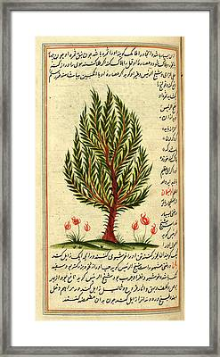 Tree Framed Print by British Library