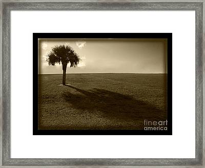 Tree Framed Print by Bruce Bain