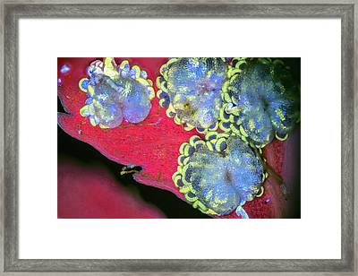 Tree Fern Spores Framed Print