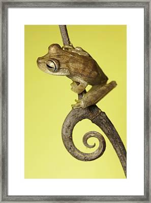 Tree Frog On Twig In Background Copyspace Framed Print by Dirk Ercken