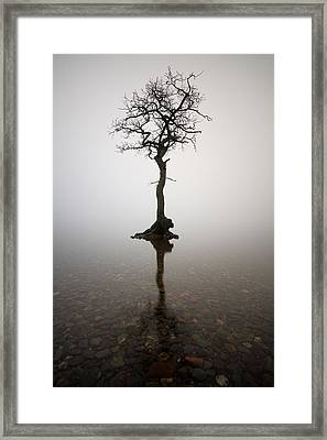 Tree Framed Print by Grant Glendinning