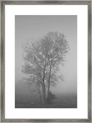 Tree In Morning Fog Framed Print by Eje Gustafsson
