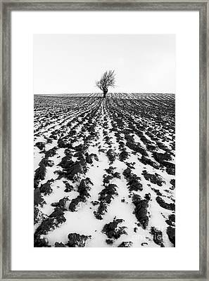 Tree In Snow Framed Print by John Farnan