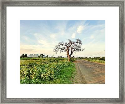 Tree On Road Framed Print by Girish J