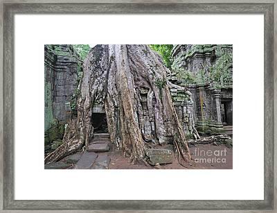 Tree Roots On Ruins At Angkor Wat Framed Print by Sami Sarkis