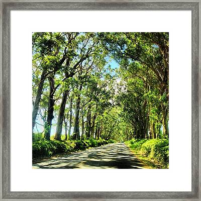 Tree Tunnel Framed Print by Lannie Boesiger